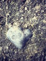 Voir Avec Le Coeur